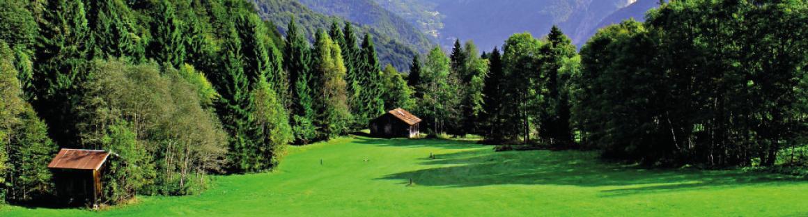 Presentato in Commissione Agricoltura e Montagna il rapporto sul patrimonio forestale lombardo